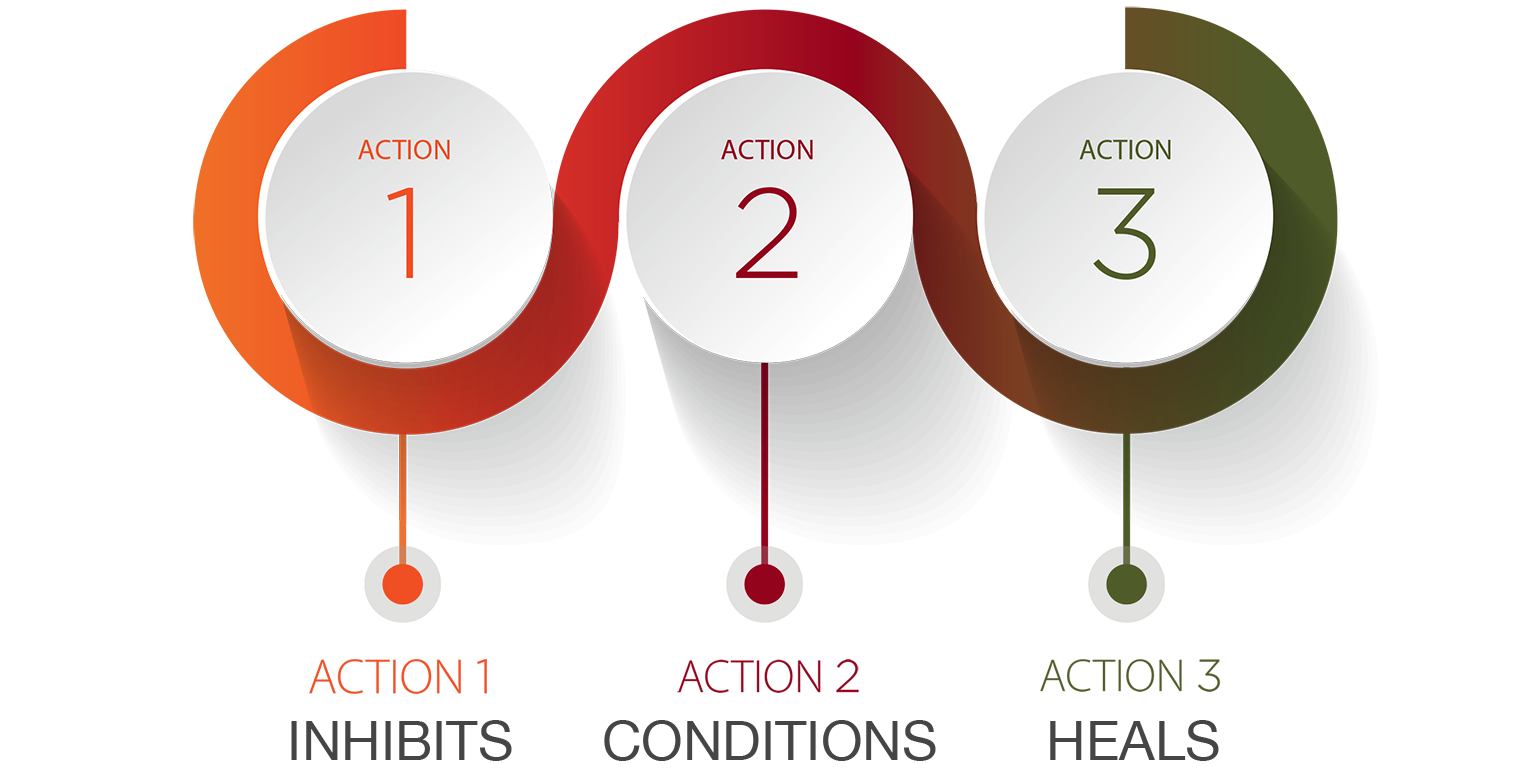 Kolsore_3 Actions Graphic_NEW.png