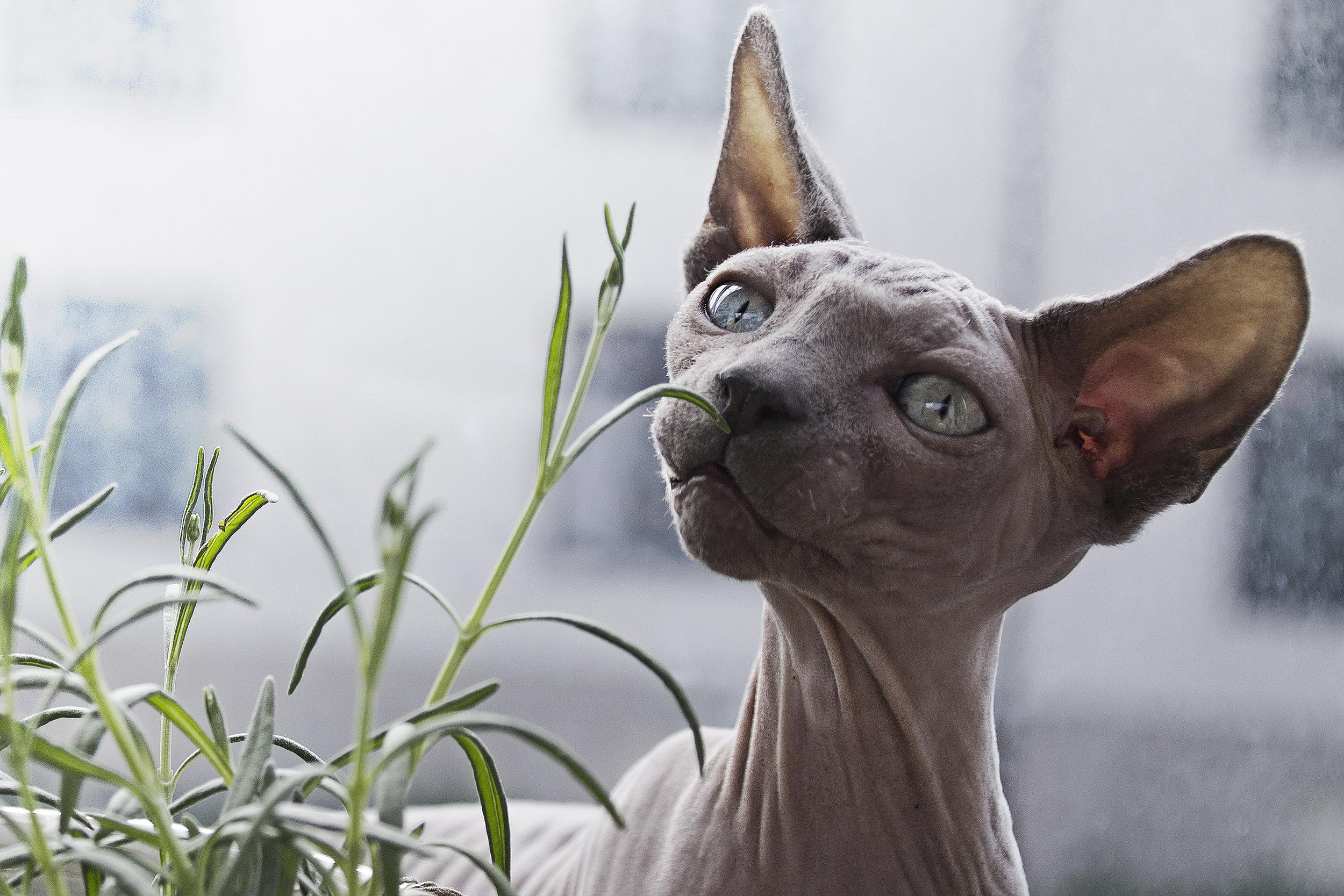 cat-litter-odors