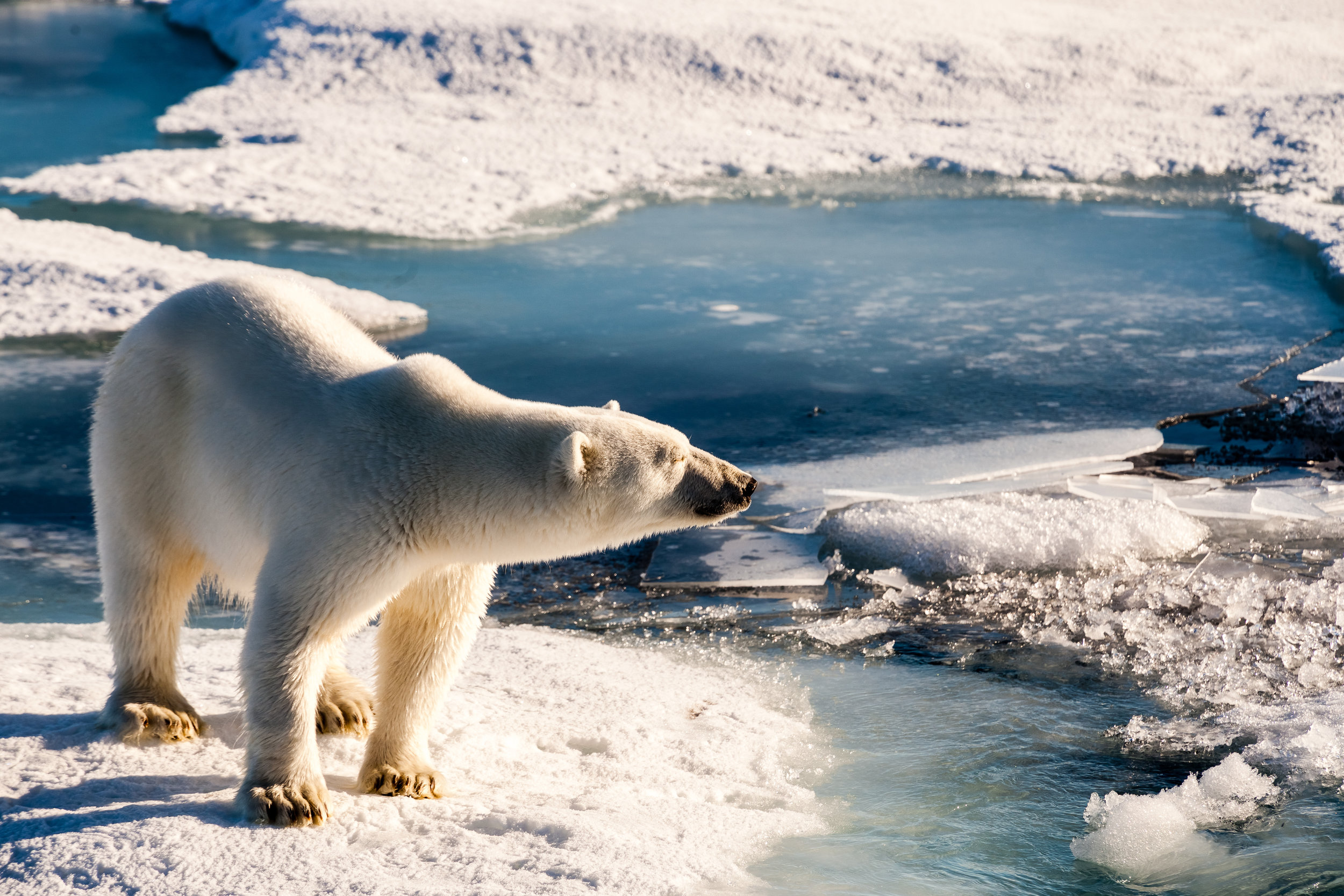 Sightings of Polar Bears