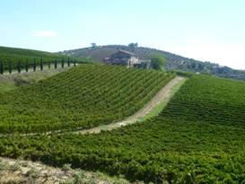 abruzzo vineyard.jpg