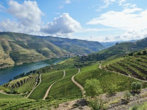 Portugal-Douro-Valley-Vineyards-300x225.jpg