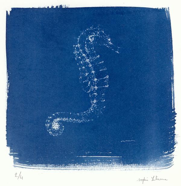 Sophie Leterme 17 Seahorse, cyanotype LR.jpg