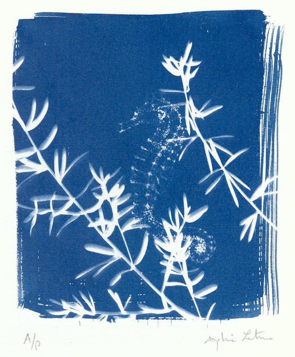Sophie Leterme 17 Weedy Sea Dragon, cyanotype LR.jpg