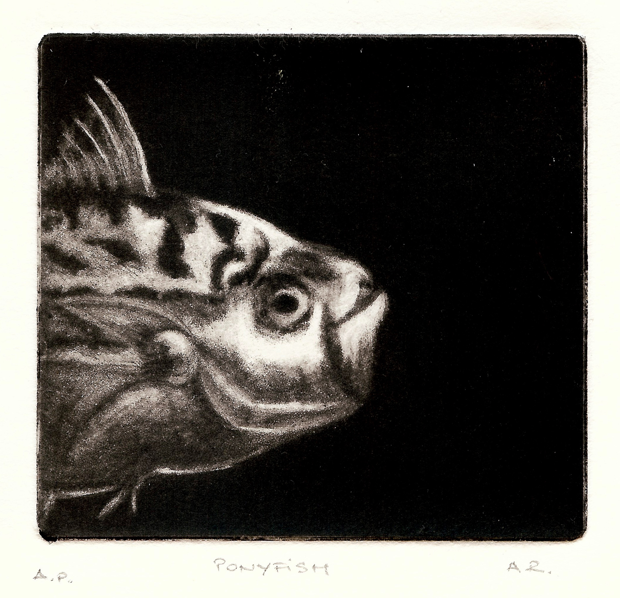 Amailia Ranisau 17 Pony Fish, mezzotint.jpeg