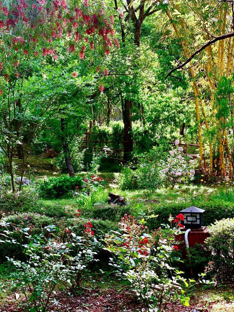 The Mirage Garden -