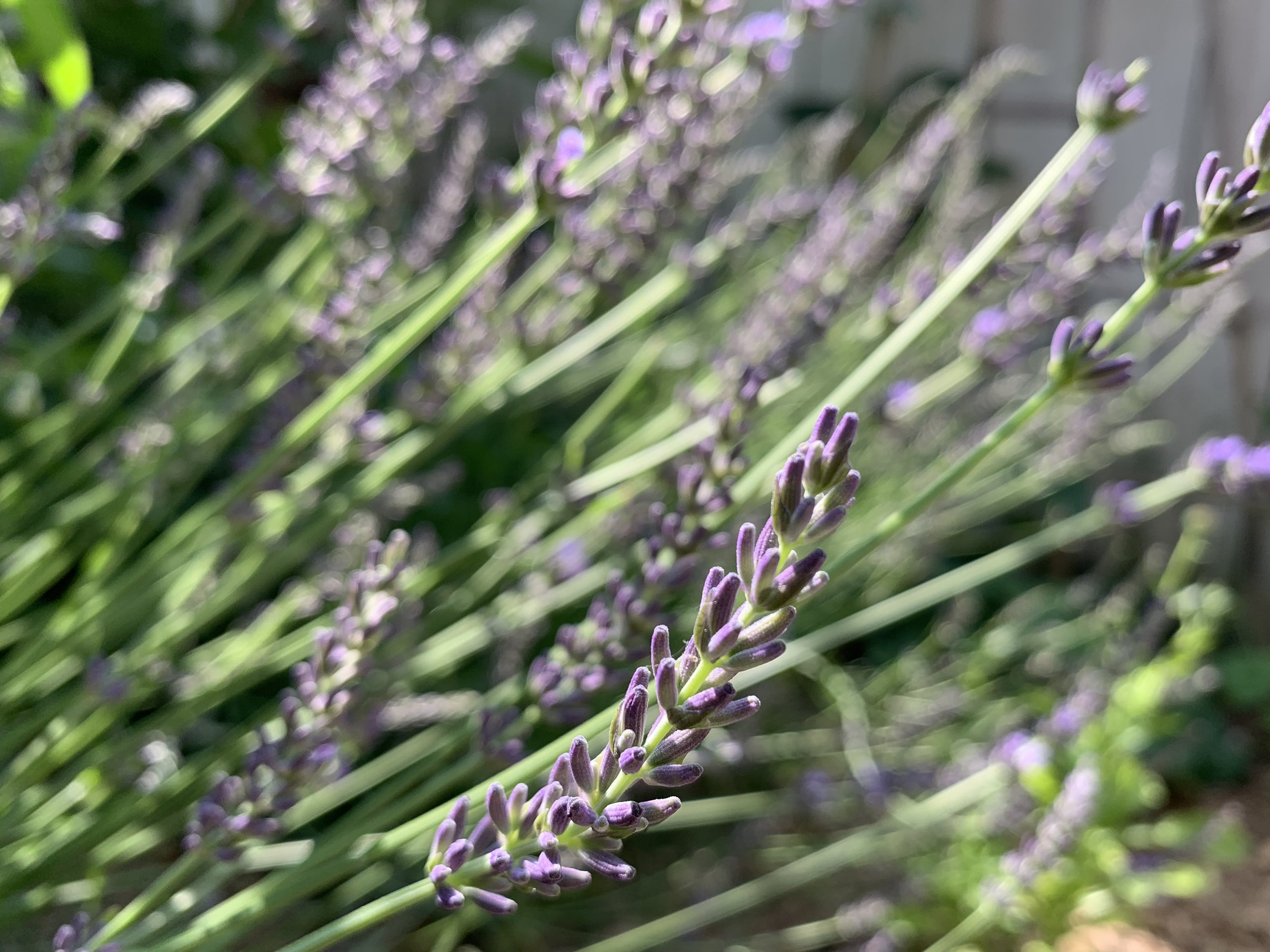 Do you want to learn more about herbs? - Your feedback will guide future courses!