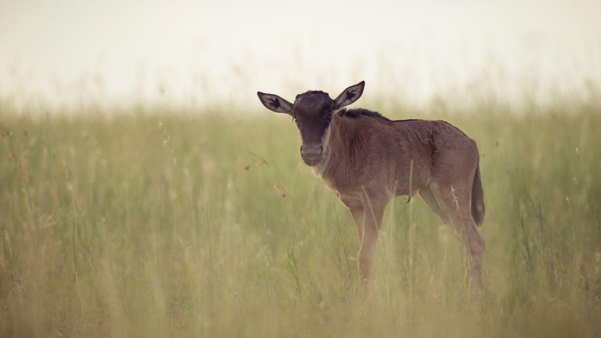 calving season -