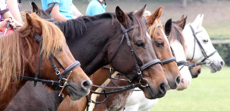 About Pony Club -