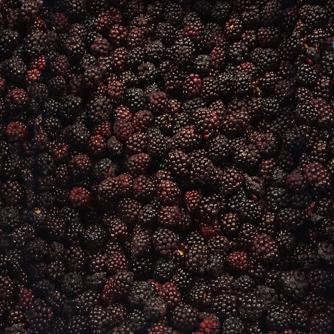 bulk_blackberry-334.jpg