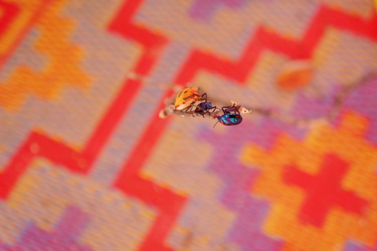 SOOG-Bugs.jpg