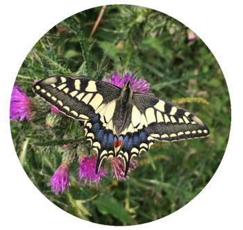Butterfly Circle.jpg