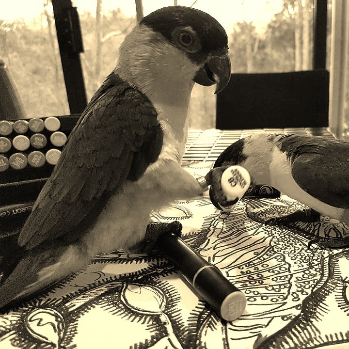 drawing birds.jpg