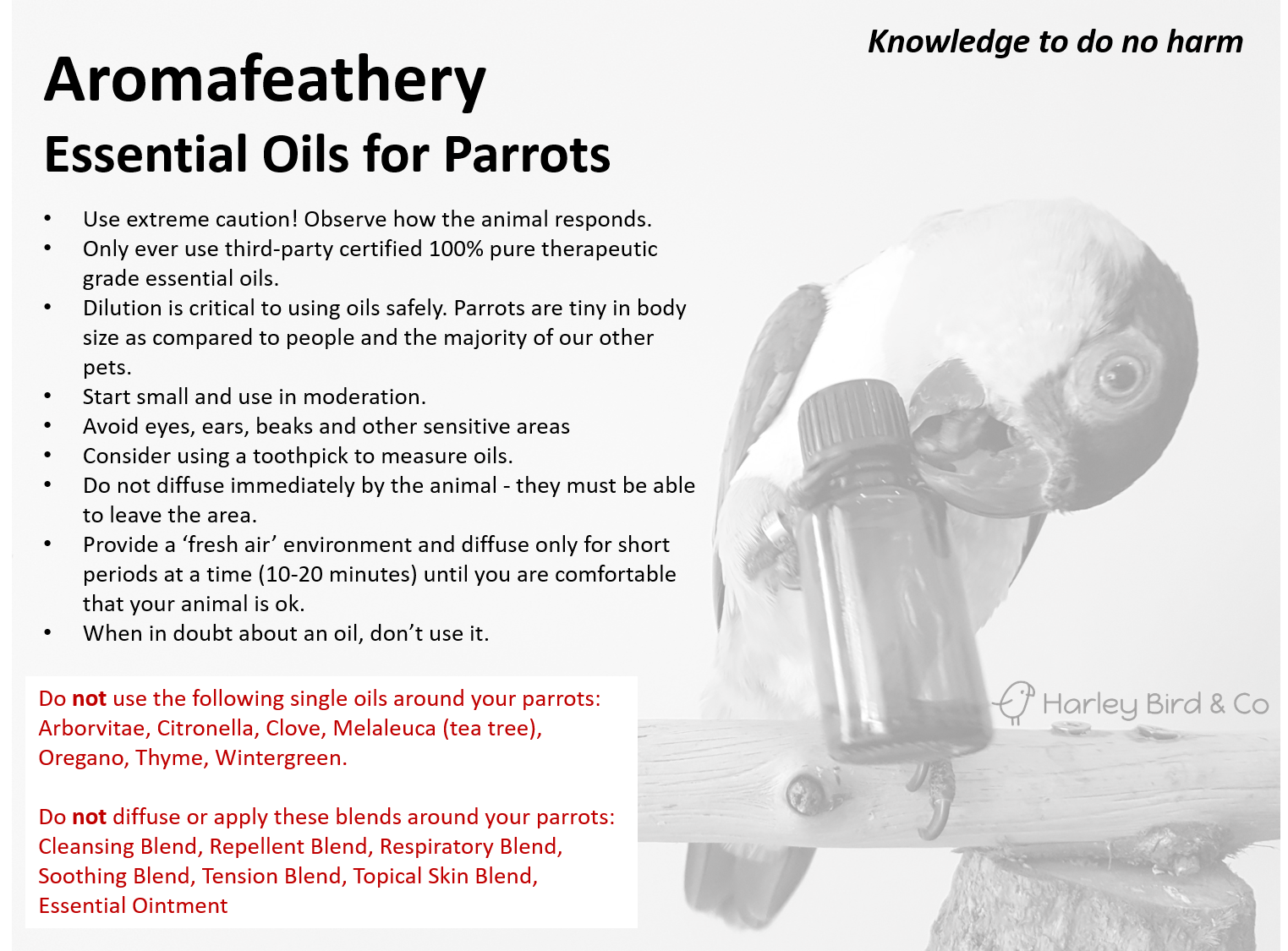 aromafeathery_parrots.png