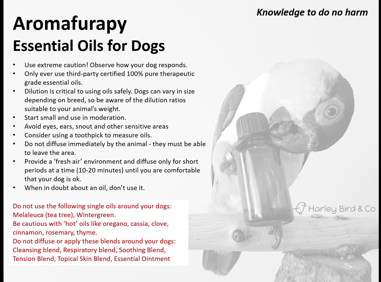 aromafurapy_dogsR1.png