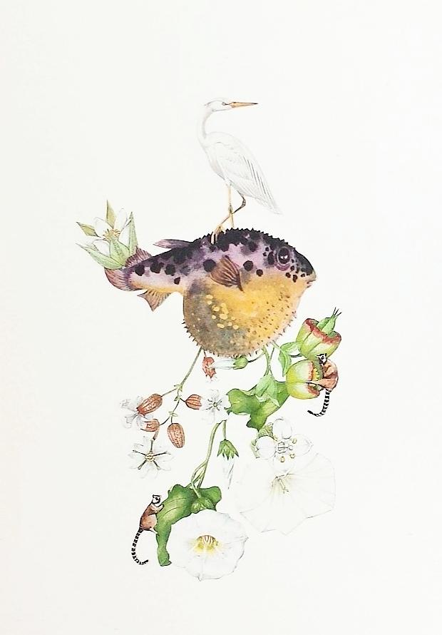 Pufferfish.jpg