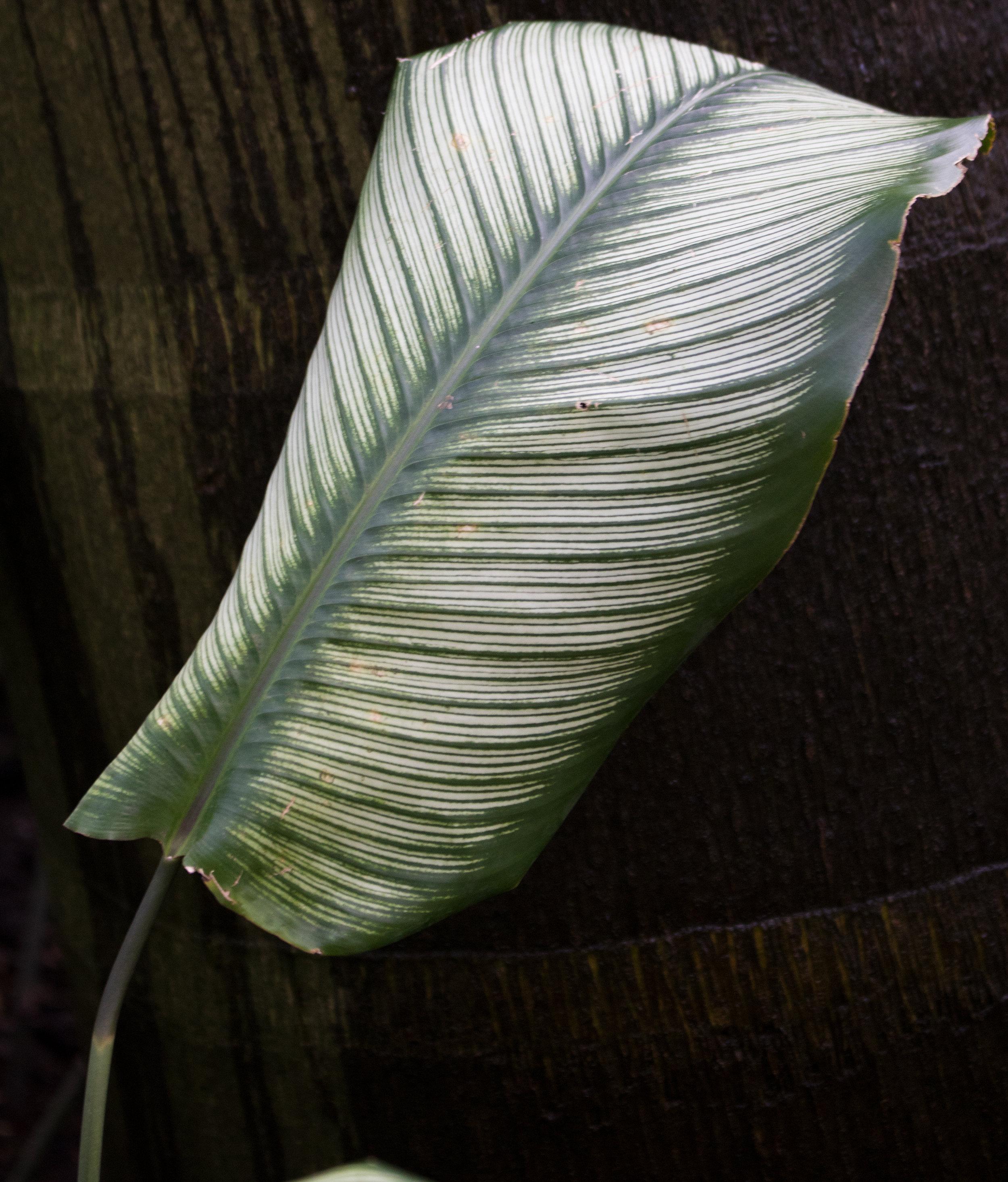 leaf-09.jpg