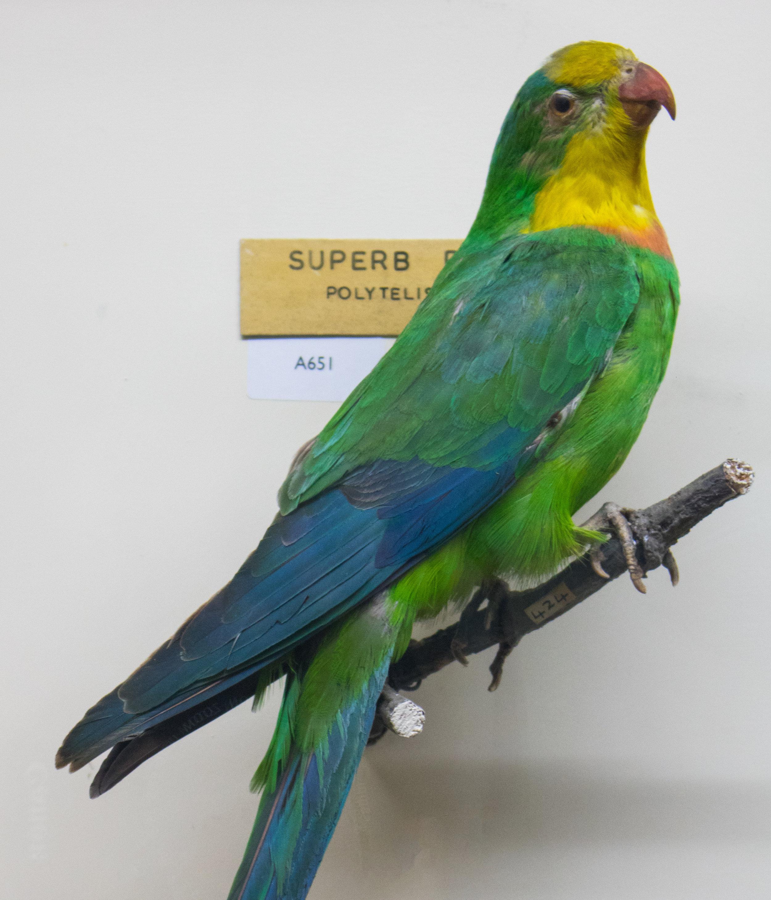 parrot-06.jpg