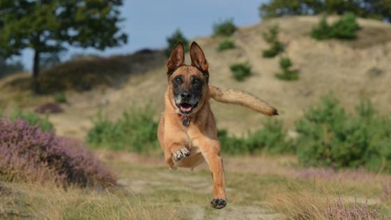 dog (1).jpg