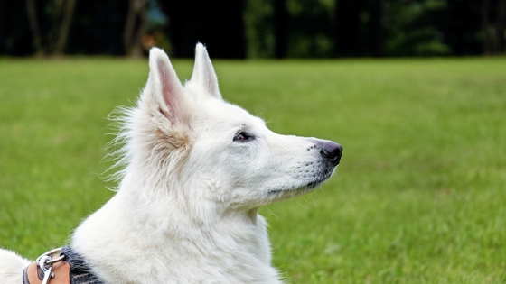 dog (5).jpg