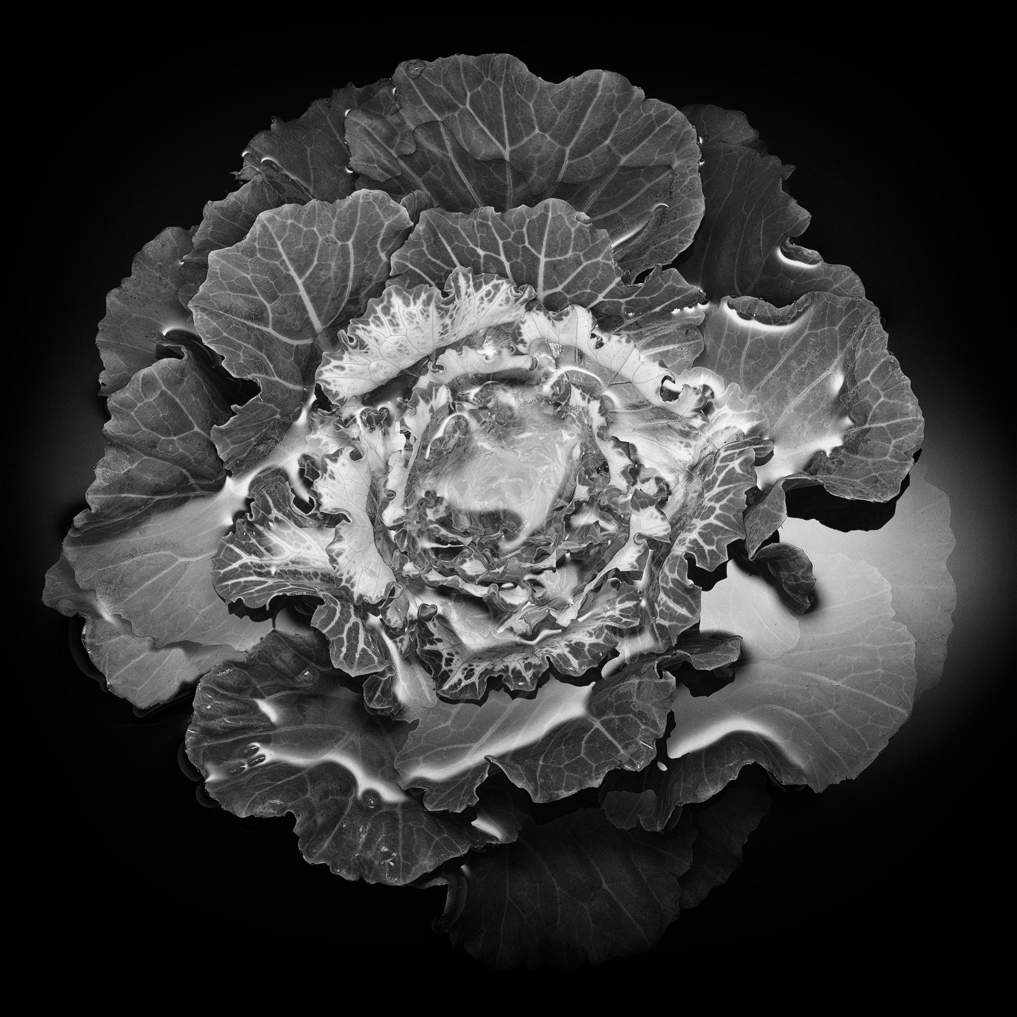 Kale-2C.jpg