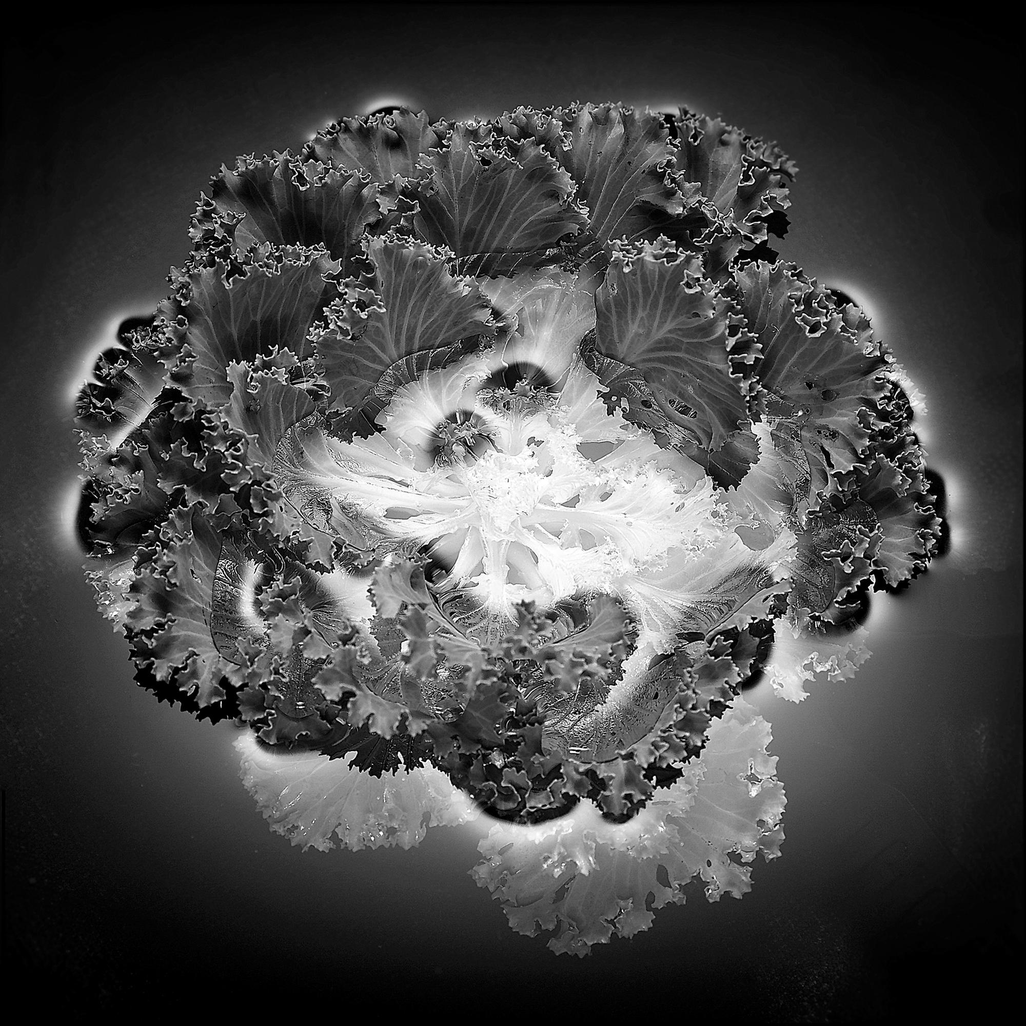 Cabbage-One.jpg