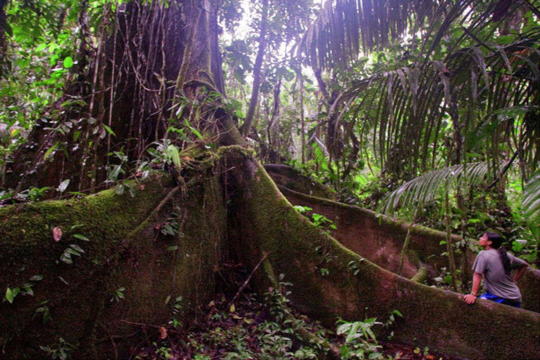 Ceibo-Baum, den indigenen Völkern heilig, ein Symbol für Hoffnung und Stärke. Photo Credit: Lou Dematteis
