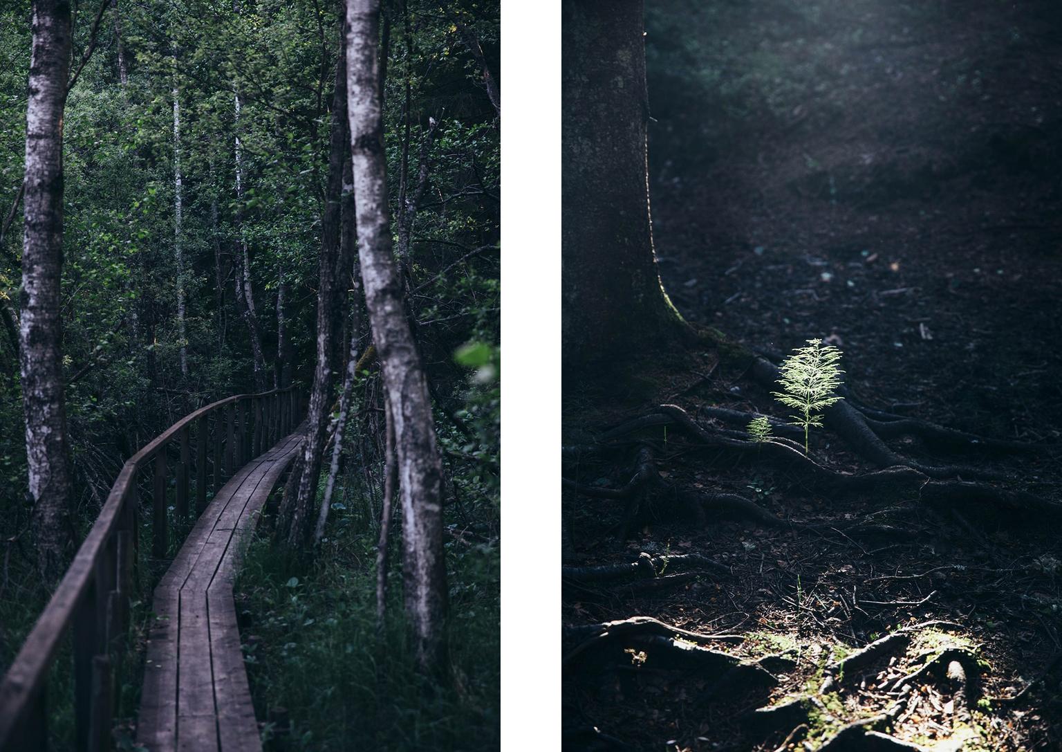theoldandmysticalforest2.jpg