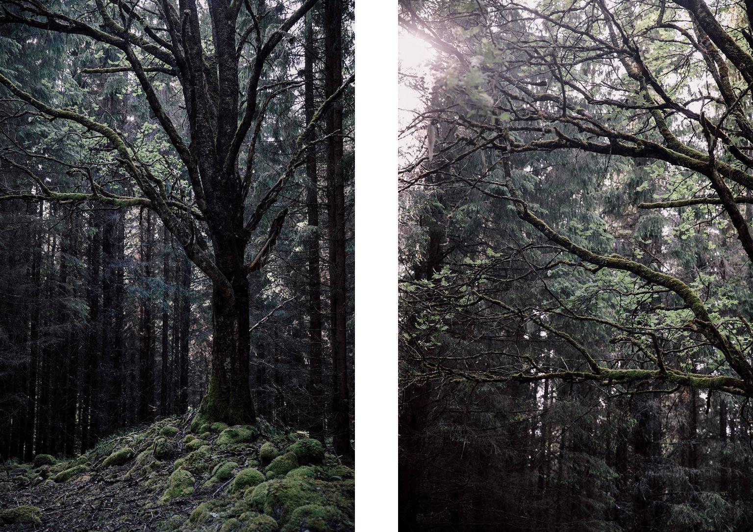 theoldandmysticalforest1.jpg
