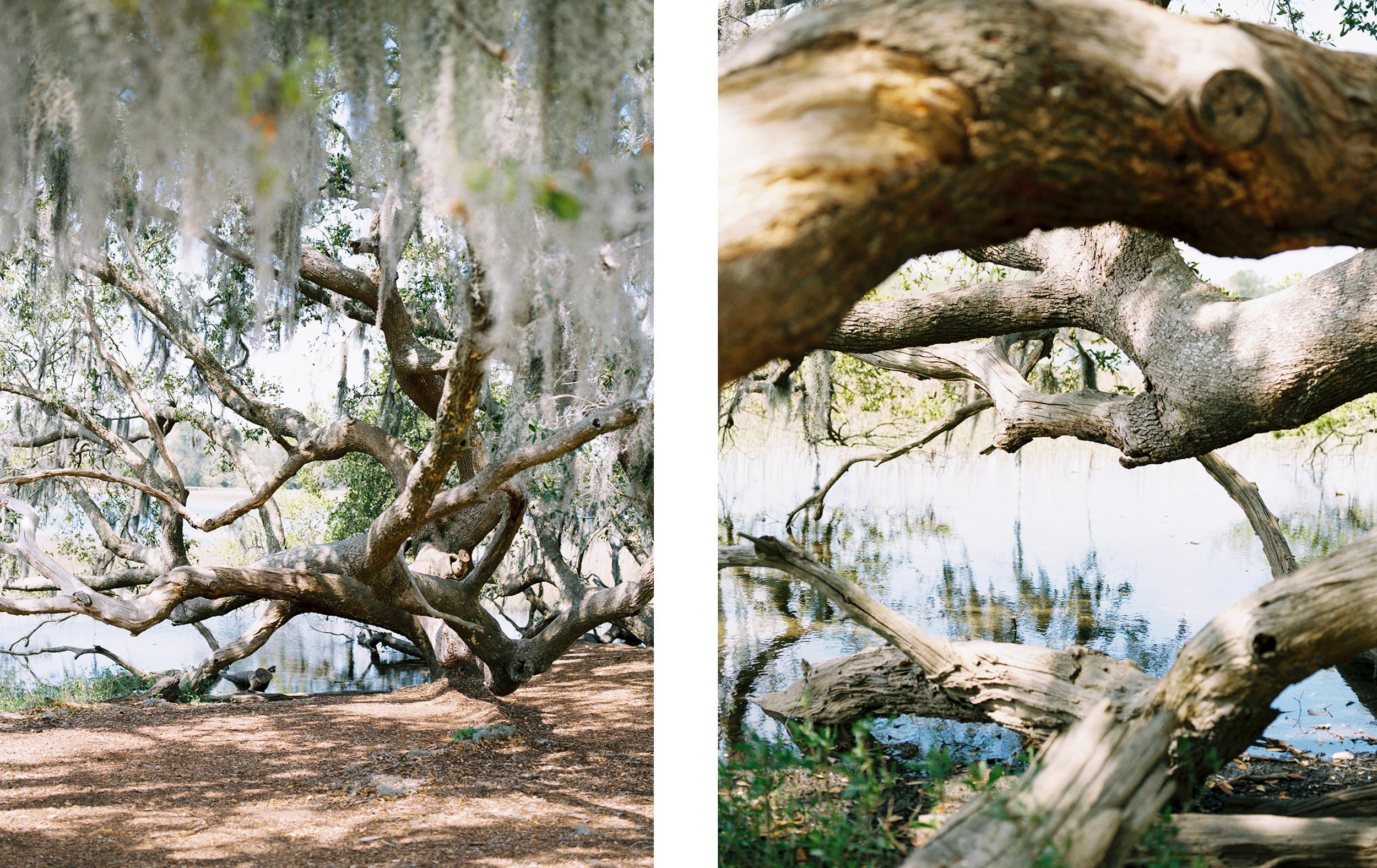 Lisa Silva Photography- Charleston and Jacksonville Fine Art Film Wedding Photography-19.jpg
