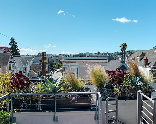 A new Mission roof garden design and install I created about a year ago. #agave #grass  #urbangardener #gardener #garden #gardening #sanfrancisco #succulents #aeonium #views