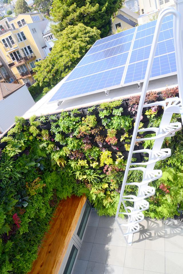 vertical garden (5).jpg