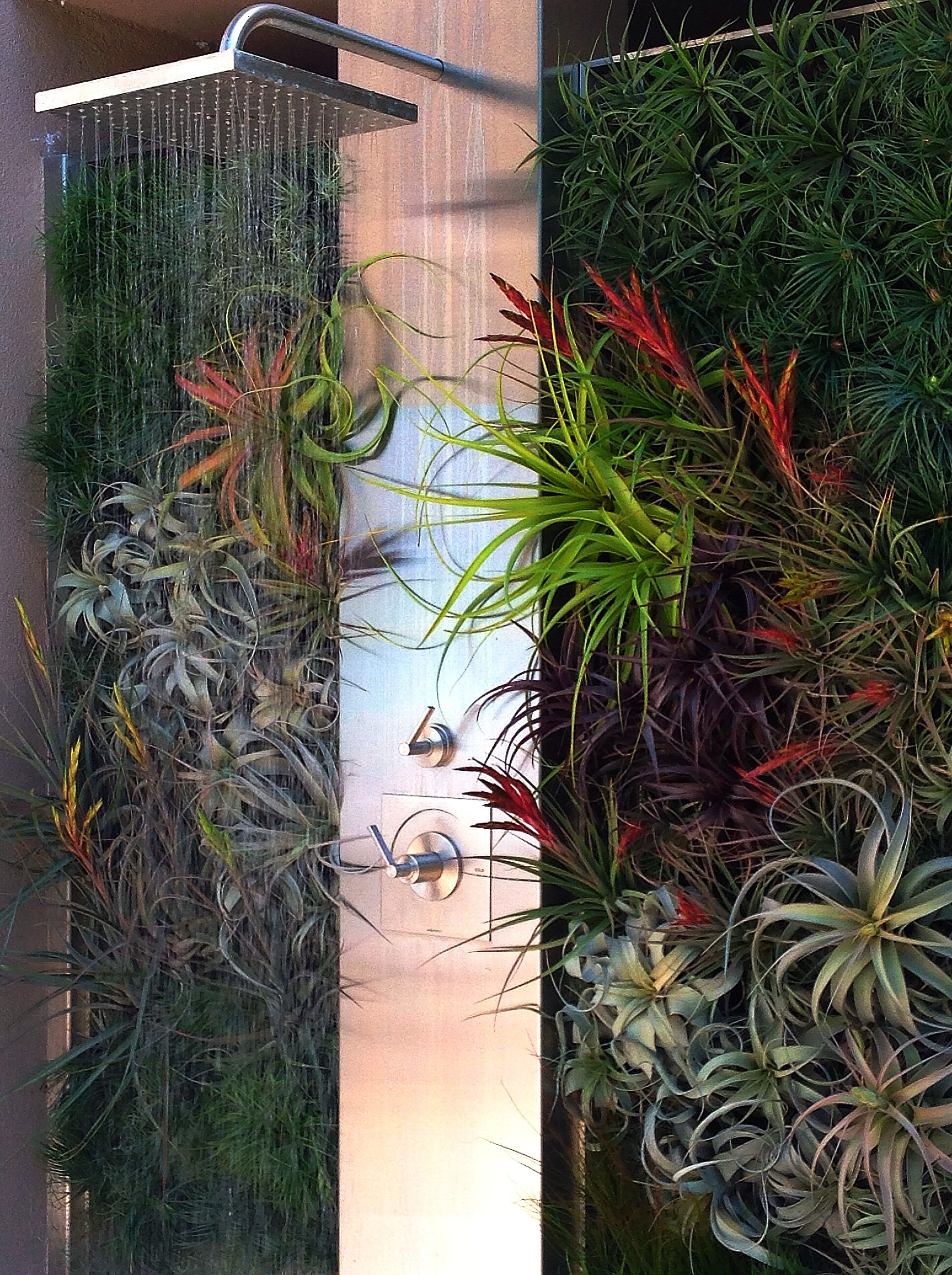Air Plant Shower