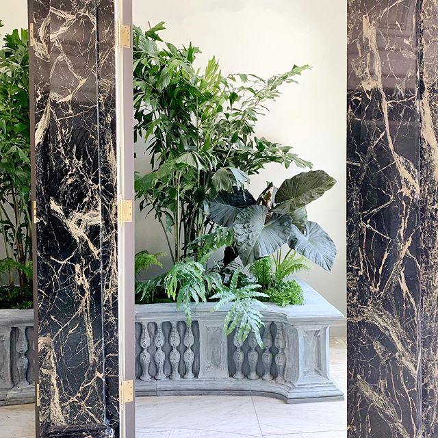 Interior plant installation in San Francisco. #interiorplants #houseplants #tropical #fishtailpalm #alocasia #fern #classicalarchitecture #sfgarden