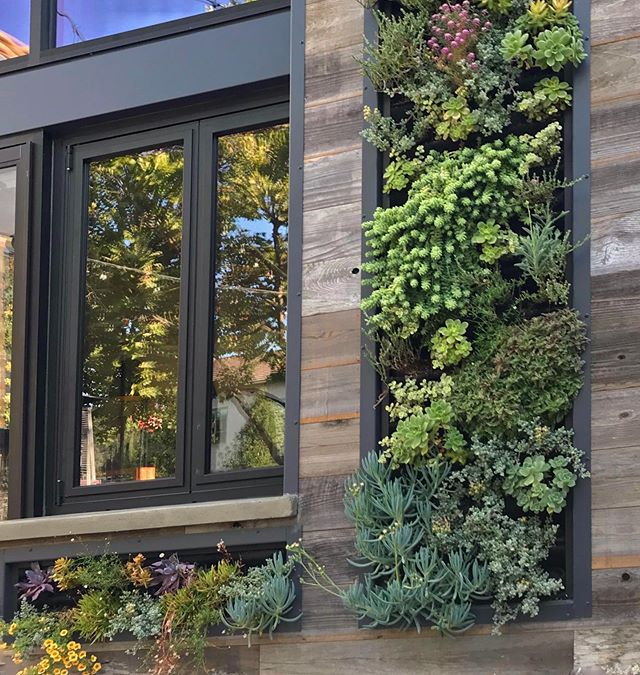 Vertical garden installation at a restaurant in East Bay. @plantsonwalls @florafelt using mostly #succulents #verticalgarden #plantsonwalls #hanginggardens #greenwall #sanfrancisco #ca #california #construction