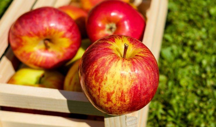 apple-1589874_1920-e1486985628112.jpg