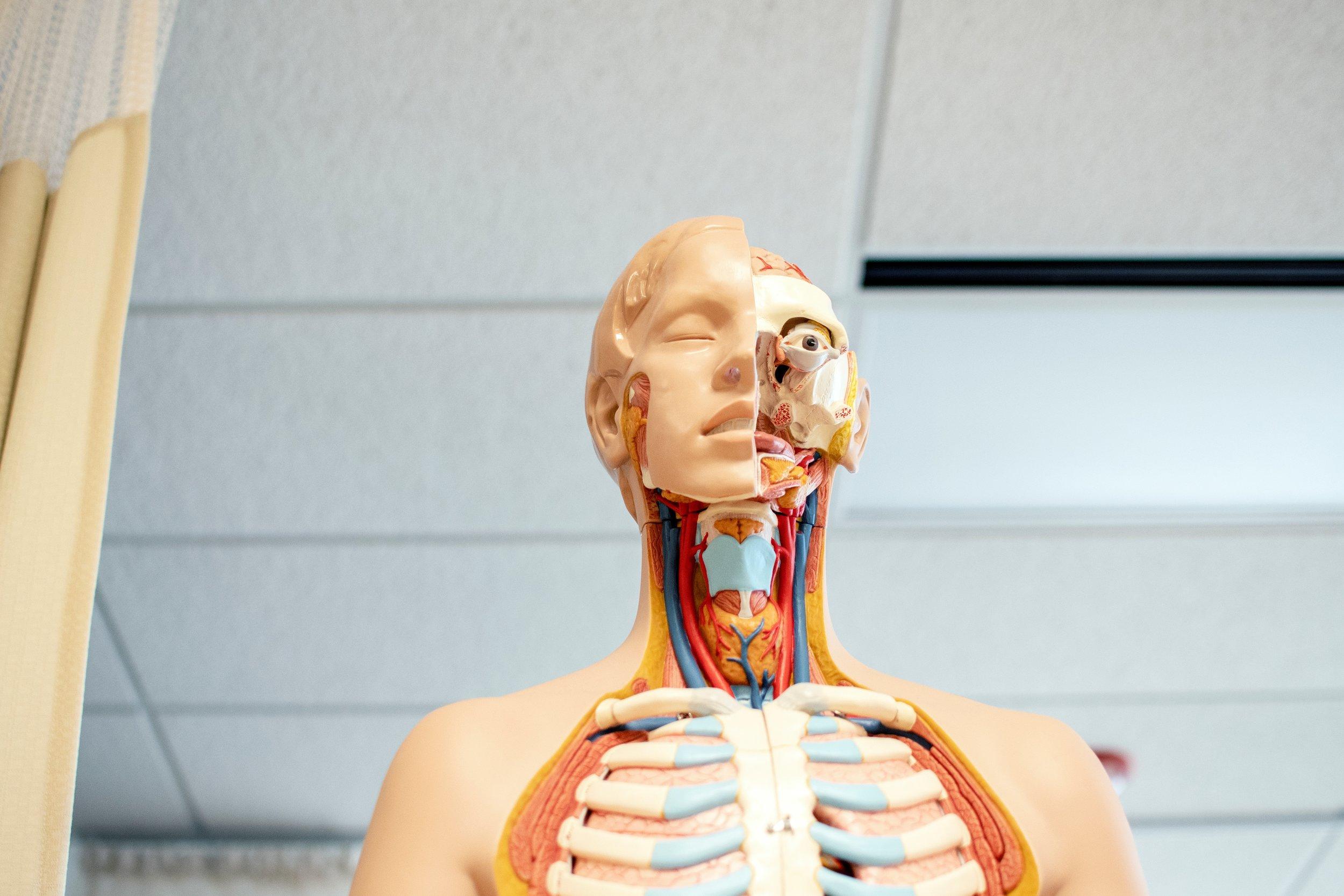 osteopathic+medicine.jpg