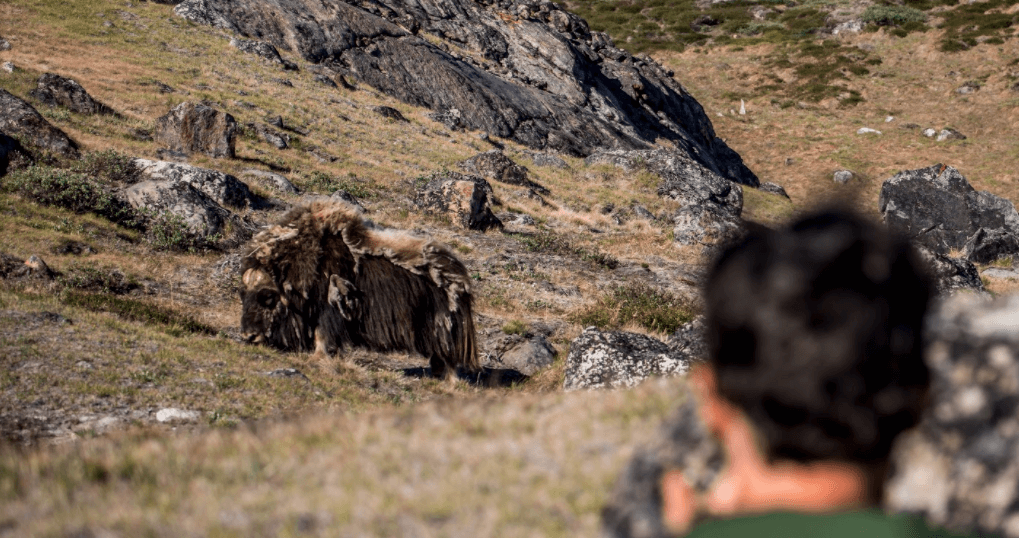 Photo by Raven Eye Photography - Visit Greenland