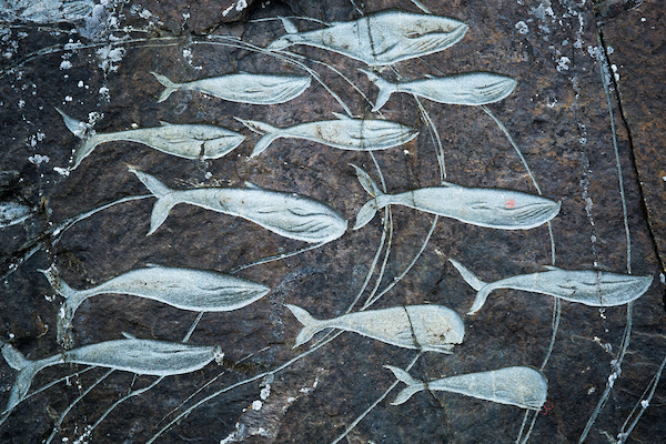 An assortment of whales carved into a rock wall in Qaqortoq in South Greenland - Stone and Man.jpg
