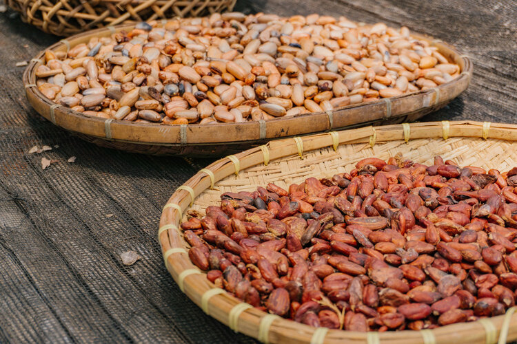 Actual raw cacao beans (left) and fermented beans (right)