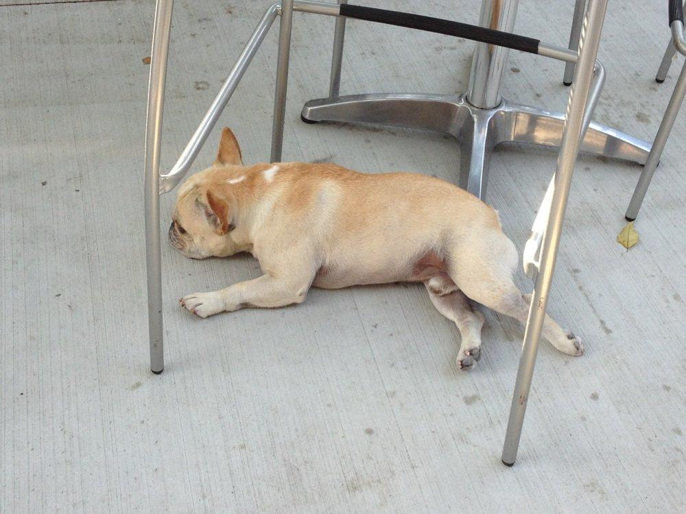 Dog Friendly 1.jpg