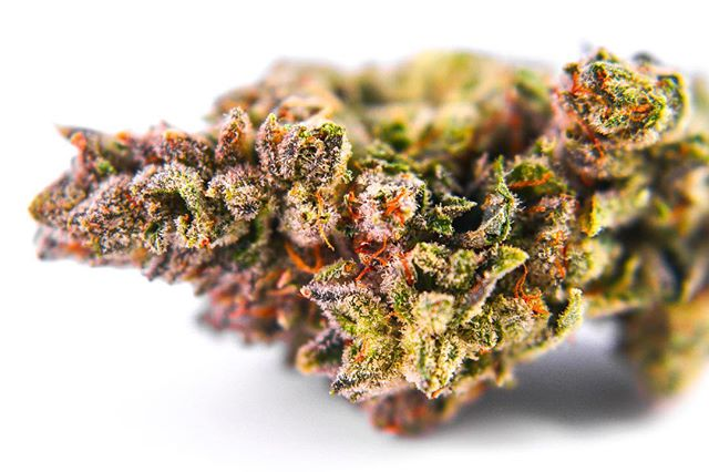 Gorilla Glue #4 from @pistilpoint is on the shelf at 26.36% THC 🌬 •--------------------------------------------------------• Do not operate a vehicle or machinery under the influence of this drug. For use only by adults twenty-one years of age and older. Keep out of reach of children. ⚠️