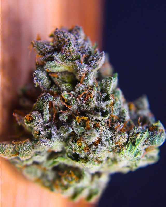 Violet Delight 💜 A floral, indica-dominant strain. •--------------------------------------------------------• Do not operate a vehicle or machinery under the influence of this drug. For use only by adults twenty-one years of age and older. Keep out of reach of children. ⚠️