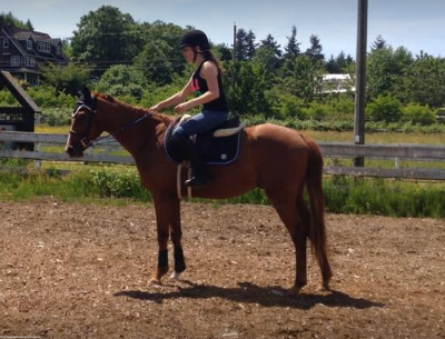 Starting milo under saddle