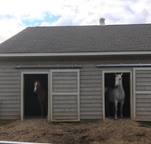 Horses in In/out stalls. Photo courtesy of Tara Martin.