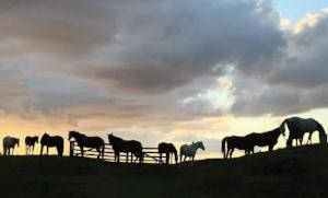 Horses in turnout. Photo courtesy of Adriahn Bain.