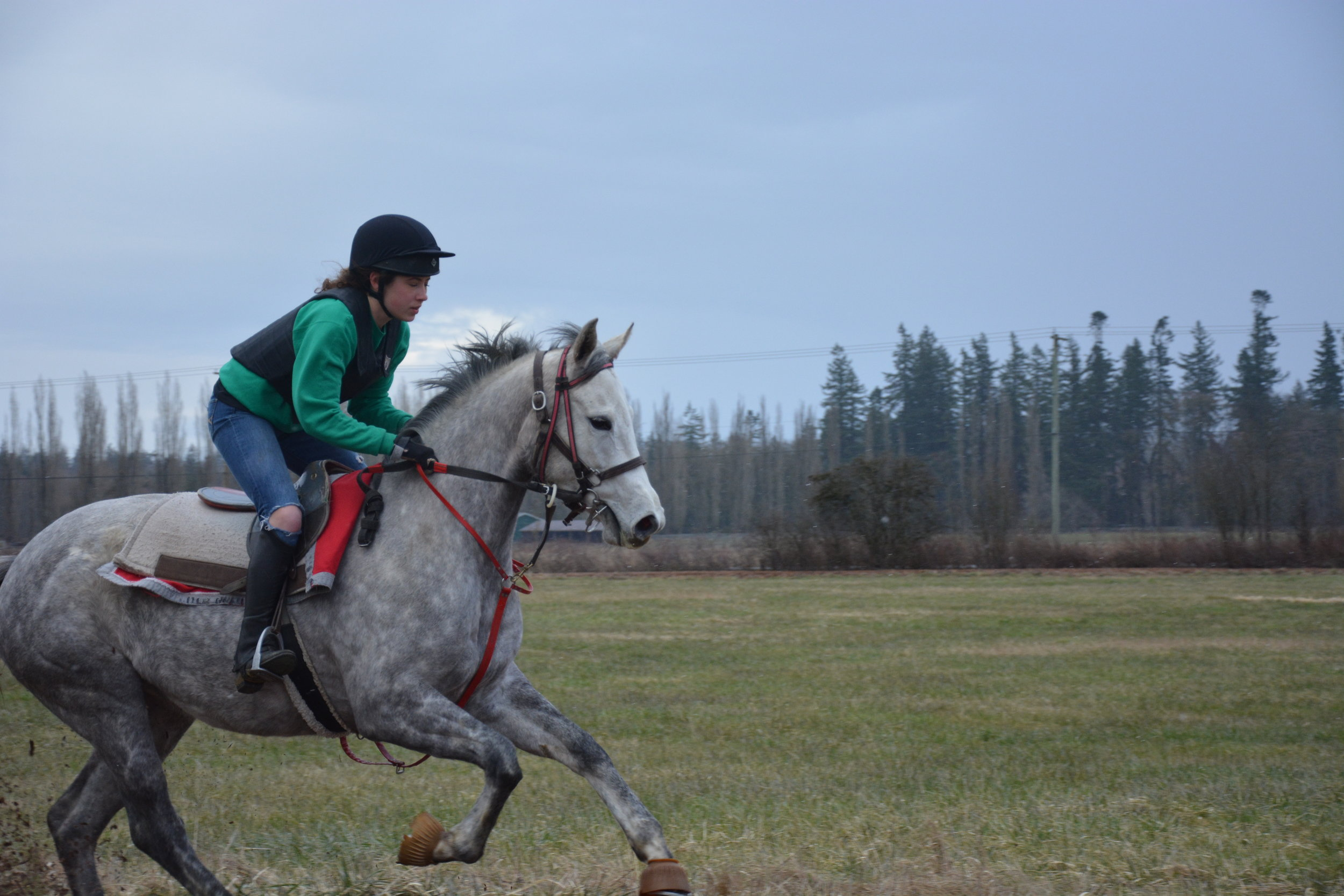 Galloping Ava, a 3y/o filly that came from Florida last year.