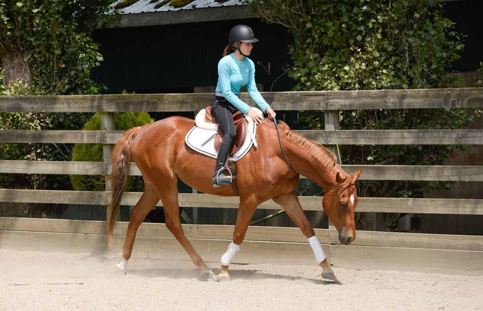 My now sold 4y/o off the track Thoroughbred gelding. He was able to be used in beginner lessons.