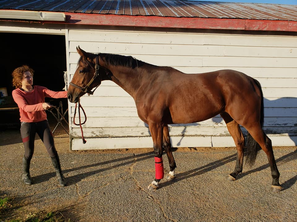 My OTTB when he was race fit, mere days after his last race.