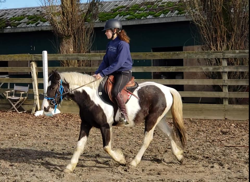 horse starting - Shelby has plenty of experience starting horses under saddle from her work with rescue horses and ponies to starting Thoroughbred racehorses under saddle for the racetrack. Her experience enables her to be a sympathetic rider and handler, giving your horse the best possible start to their ridden career and eliminating stress. Saddle breaking programs are recommended for several sessions a week, board may be a possibility depending on availability. Saddle breaking starts at $45 per session, with discounts on full training and half training packages.