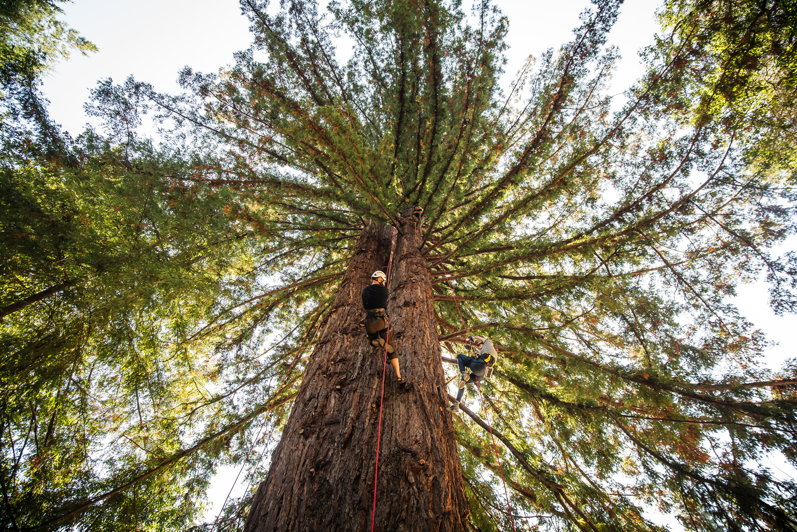 - A whole slate of out-there activities. Climb a redwood.